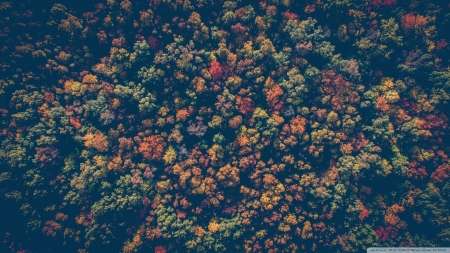 Colorful Forest - colors, autumn, forests, trees, nature