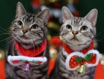 Christmas Cats