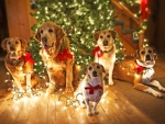 dogs lighted up