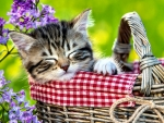 Kitten Sleeping in Basket