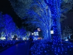 Blue Christmas Lights!