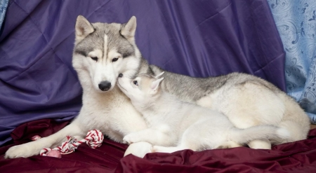•ღ✿ღ• - mammal, animal loves, wolves, animal