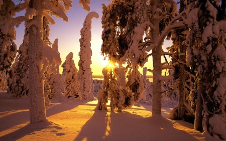 Snowy Sunset - sunset, winter, snow, landscape, nature, trees