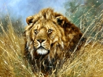 African Lion F