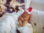 Christmas Kitty ♥