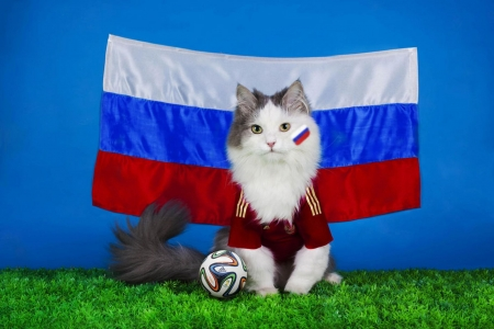Footballer - animal, ball, green, blue, funny, footballer, white, pisica, cat, svetlana valyiskaya, grass, red, flag