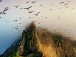 Seagulls in Air Over Mountains