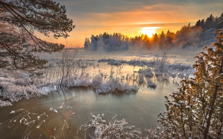 Forest Lake - Lake, Winter, Nature, Sun