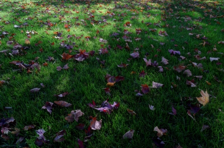 I Miss This... - fall, shadows, leaves, grass