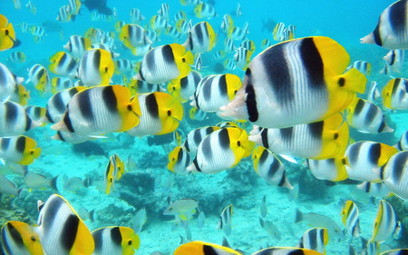 Tropical Fish - water, animals, fish, aqua, blue water, underwater, tropical fish