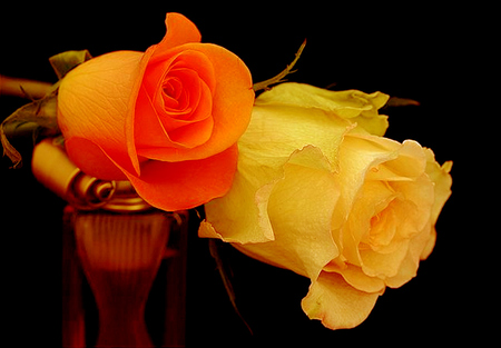 Peaches and cream flowers nature background wallpapers for Cream rose wallpaper