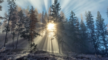 Sun Rays in the Forest - Winter, Nature, Sun, Forest