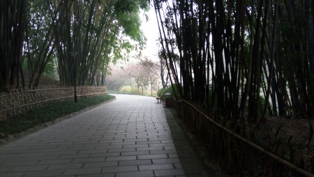 A Quite Path - Nature, Green, Park, Tranquility