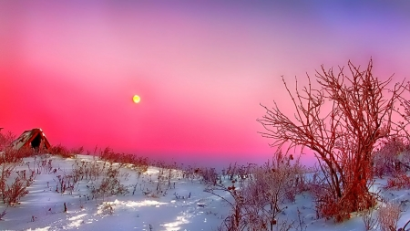 Winter Sunset - splendor, cold, sunset, trees, snowflakes, nature, ice, winter, snow