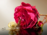 Snail and rose
