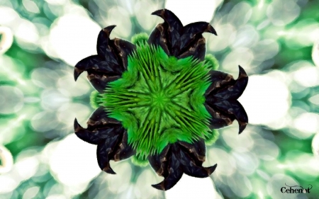 Spider star - star, texture, white, black, by cehenot, painting, art, green, pictura, abstract