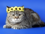 Cat with floral crown