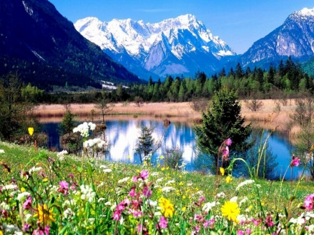 Mountain Meadow - snow, nature, trees, lake, mountains, flowers, sky, spring, reflection