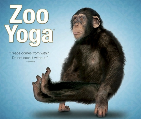 Yoga monkey - blue, animal, funny, yoga, monkey