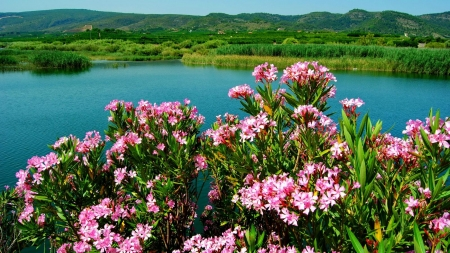 Flowers at Greenery Lake Shore - emerald, pink, bank, nature, lake, flowers, green, river, shore