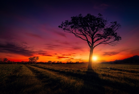 Sunset - Sunset, tree, sky, nature