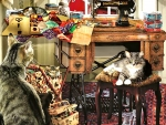 The Sewing Room - Cats f