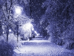 Night-dreaming Winter Magic