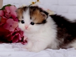 Kitten among flowers