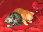 Valentine Kitties