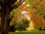 Tree lined park in autumn