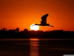 Bird Flying at Sunset