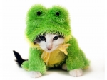 Kitten froggy