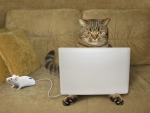 Cat with laptop and mouse