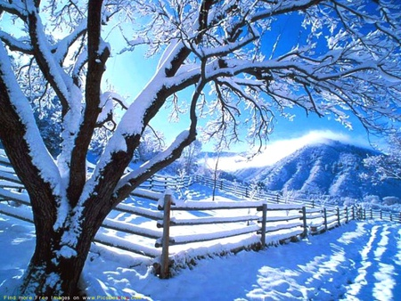 cold weather - wallpaper, nature, tree, winter