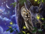 Summer Night's Owl