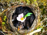 Nestlings With Flower