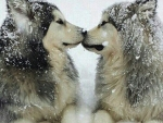 Winter Smooch
