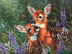 Sweet Fawns