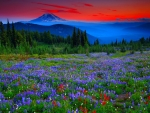 Mountain meadow at sunset