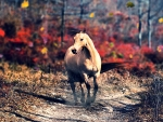 Buckskin Horse in Autumn
