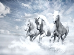 White Horses in the Surf
