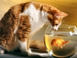 Cat and Goldfish Bowl F