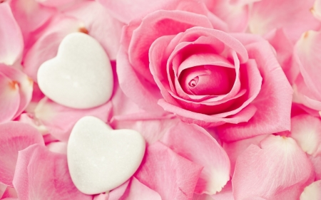 Happy Valentine's Day! - rose, skin, petals, valentine, white, pink, card, heart