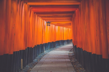 Fushimi Inari Shrine - torii, shrine, inari, gate, japan, japanese, red, kyoto