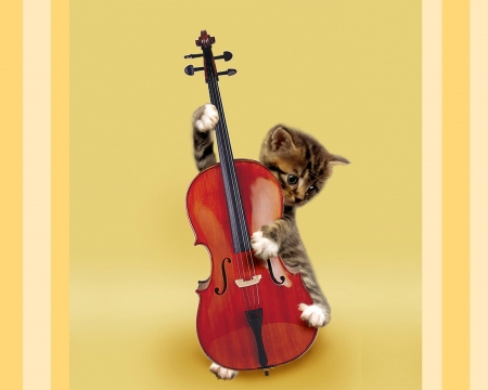 Talented kitten - instrument, yellow, collage, cute, animal, funny, violin, by cehenot, pisica, kitten, cat