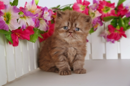 Flowers lover - kitten, sweet, cute, kitty, love, cat, flowers, adorable, fluffy, garden