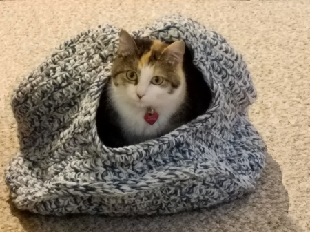 Cat in Hiding - blue, hiding, Calico, cat