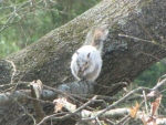 Bianca the White Squirrel