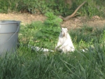 Bianca the White Squirrel after drinking water