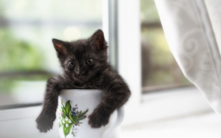 Kitten - funny, cup, white, black, kitten, cat, pisica, cute